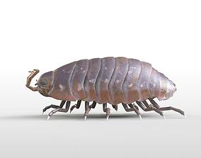 Pillbug Rigged 3D asset