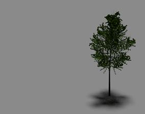 3D model RIGGED TREE D