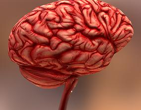 3D model game-ready HQ Human Internal Organs