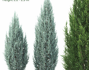 3D Juniperus scopulorum 01