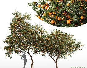 Orange fruit tree 3D model