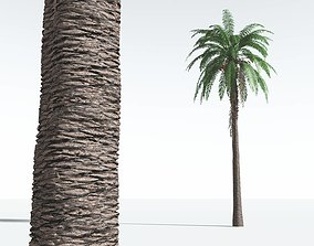 EVERYPlant Date Palm 05 --16 Models--