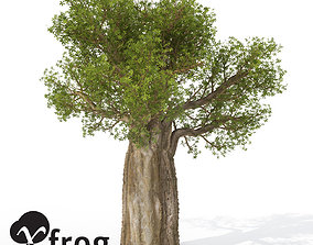 3D model XfrogPlants Baobob