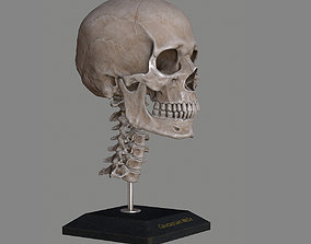 3D asset realtime Human Skull Caucasian Male