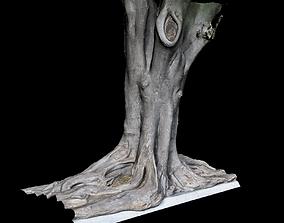 Ficus 3D model scanned