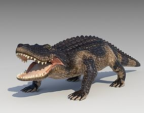 3D asset Alligator Animated