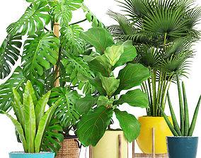 3D model palm Collection plants