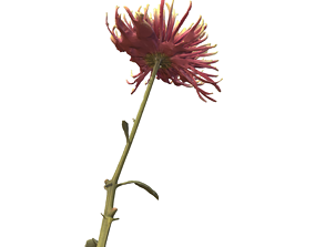 Fw4 - Coxcomb Flower 3D