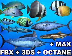 3D asset Ocean Fish Package