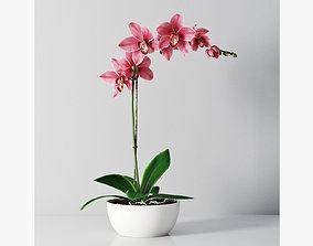 3D Orchid1