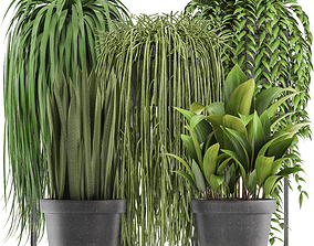 plants 3D Collection of Exotic Plants