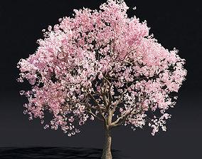 Sakura 1 3D