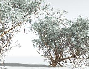 EVERYPlant Big Sagebrush 01 --12 Models--