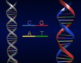 3D model human DNA Strand