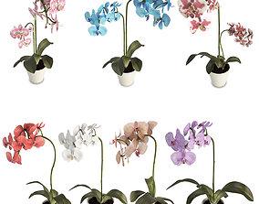 Orchids Flowers 3D model leaves