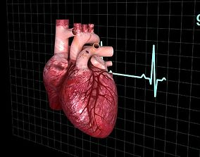 Human heart animated 3D model