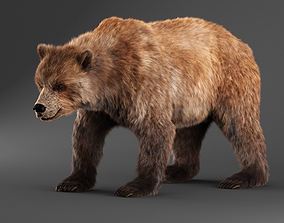 Brown Bear bear 3D