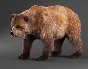 Brown Bear bear 3D