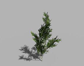 3D asset low poly shrub