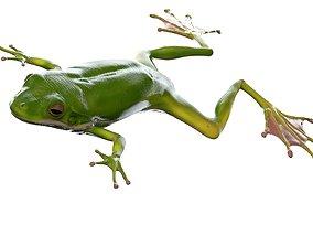 3D Frog Realistic