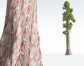 3D asset EVERYPlant Coastal Redwood Cartoon 11 --12
