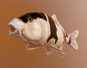 koi fish 3D asset
