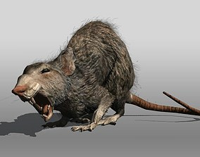 3D asset Rat animal