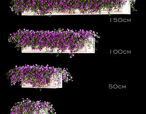 3D Flowers for the balcony - Petunia