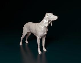 Segugio Italiano 3D print model