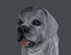 3D FDJI-011 Standing Dog