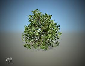 3D model Mediteranean Bush