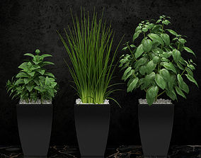 3D model Kitchen plants