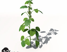 XfrogPlants Soybean 3D model