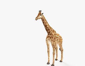 Giraffe HD 3D