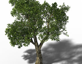 3D Windland Prairie - Big Tree 01
