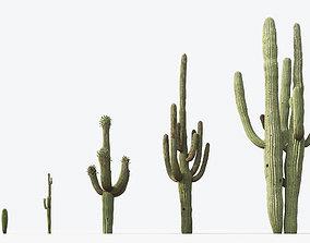 3D Carnegiea gigantea Saguaro 01