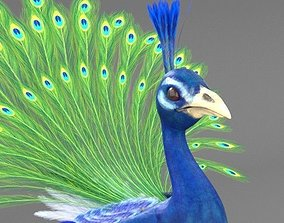 3D Peacock