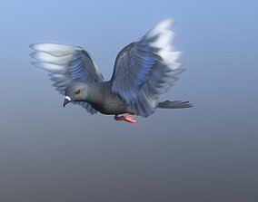 Medium Detail Animated Pigeon 3D asset