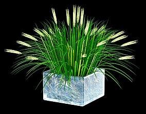 3D nature Ornamental grass