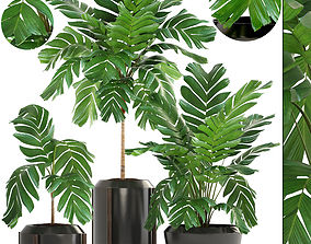 3D Collection of plants Palms