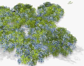 3D asset Flowers Woodland Forget-me-not Myosotis