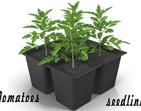 3D model Seedlings of tomatoes