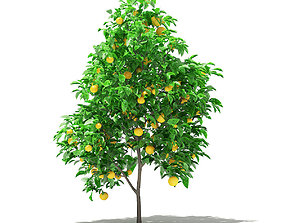 3D Grapefruit Tree with Fruits