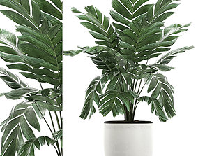 3D Chamaedorea palm in a white pot for the interior 655