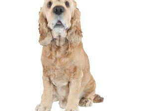 No384 - Sitting Dog 3D