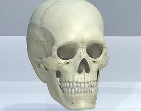 game-ready Skull 3d - Human Skull