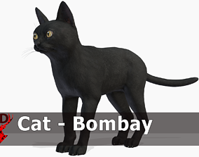 Cat - Bombay 3D model