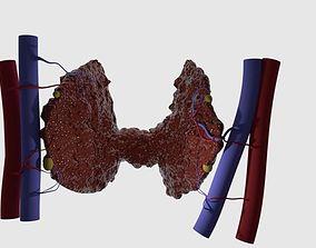 Thyroid 3D print model
