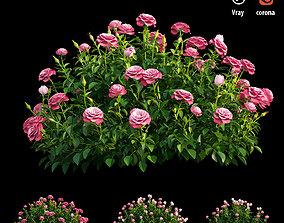 Plant rose set 03 3D model plant