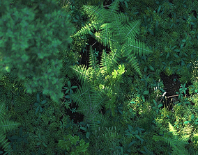 Forest Nature Scene 3D